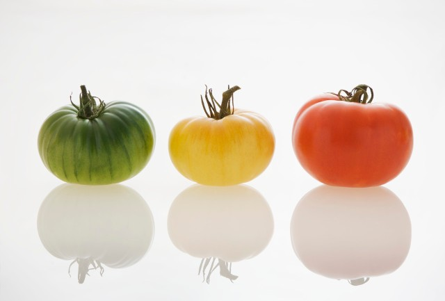 Three Tomatoes with Shadows
